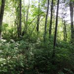 Guided Hike Series: Birch Hill Loop