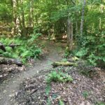 Spring Maintenance on the WRLF Loop Trail (All slots FILLED)