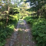 Guided Hike Series: Leete Hollow > Dodd's Cone Bushwhack